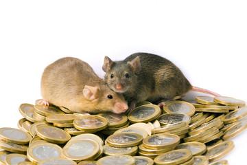 Zwei Mäuse auf Euromünzen