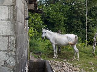 Nag Horse in Costa Rica