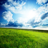 Fototapety field of spring grass and sun