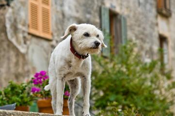 Hund auf der Mauer