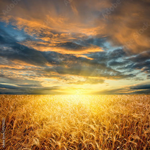 wheat field horizontal
