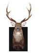 Nine Point Mounted Stag's Head with path