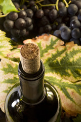 Weinflasche mit Korken, Weinblätter und Trauben Stillleben