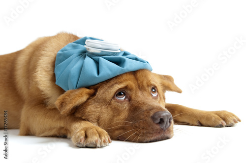 Sick Dog - 17265484