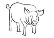 Schwein001
