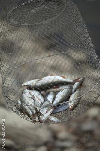 pêche - 17270425