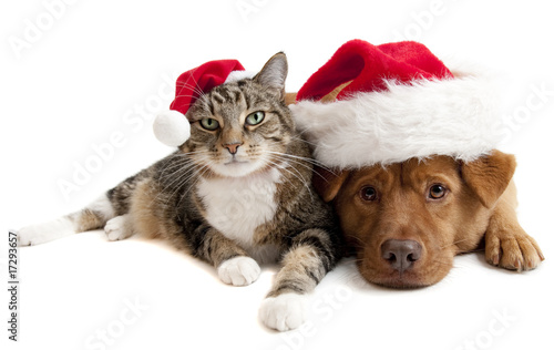 Staande foto Kat Cat and Dog with Santas Claus hats