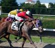 Sprinting Racehorses