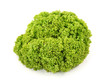 Fresh green lettuce on white background