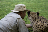 Otjitotongwe lodge and a tame cheetah getting very close poster