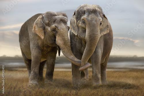 Fotobehang Afrika Elefant 003