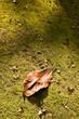 Leaf on ground