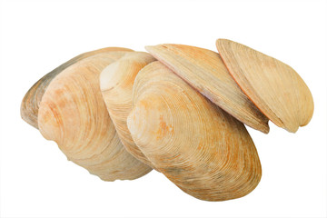 Aquatic Mollusk Shells for Gourmet Meals