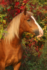 Beautiful horse in the autumn garden
