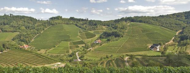 Weinberge im Schwarzwald