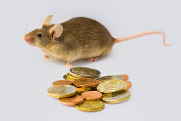 Maus und Geld
