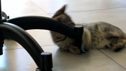 chaton jouant autour de la chaise