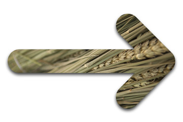 flèche blé