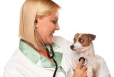 Attractive Female Doctor Veterinarian with Small Puppy poster