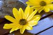 flor, madera y piedra
