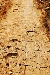 Horse tracks