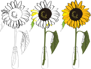 sunflower_bottle