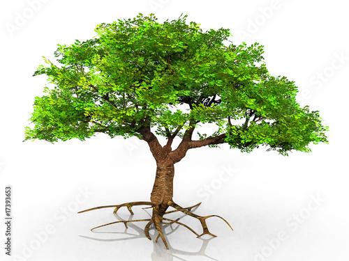 Staande foto Kameleon l'arbre vert