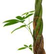 image d'une plante verte, calme, sérénité et relaxation