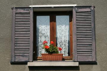 Geranien im Fenster