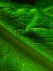 close up of a lush green leave