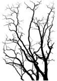 Fototapety Tree branches silhouette