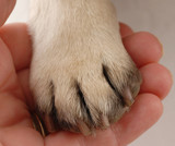 veterinary care - persons hand holding dog paw poster