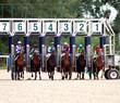 Horserace Start Gate.