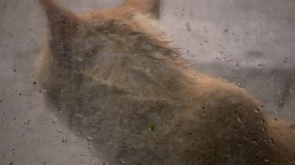 Gato en la lluvia