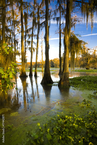 Caddo Lake, TX