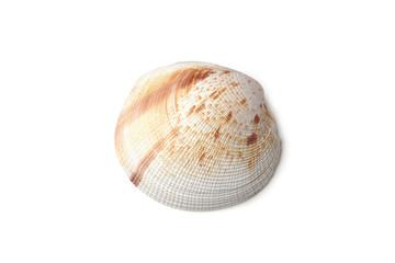 Muschel auf weißem Hintergrund