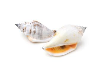 Strandmuscheln - weißer Hintergrund