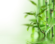 Bambú en el agua