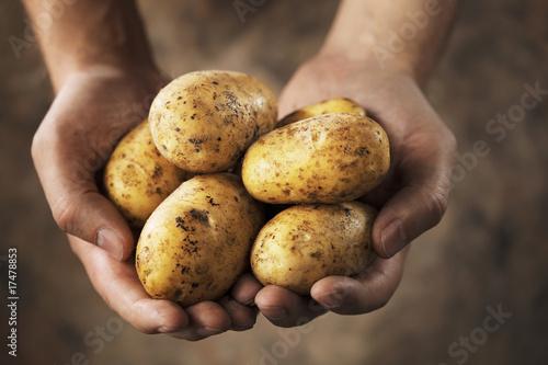 Potatoes - 17478853