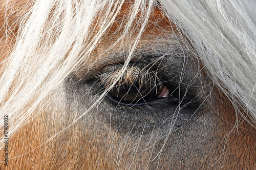 Fototapeten,pferd,pferd,gaul,rosopsida