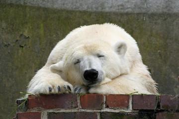 0910171 - Eisbär