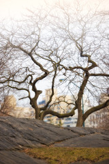 Central Park in wintertime