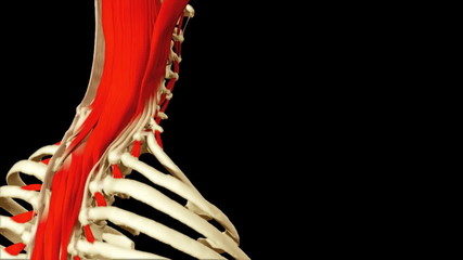 3D animation illustrating the human anatomy