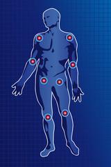 Anatomie des articulations