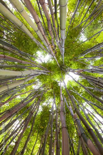 las-bambusowy