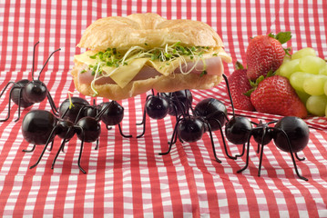 Ants Stealing Picnic Food
