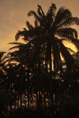 Silhoutte palms