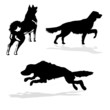 silhouette hunt dogs on white background