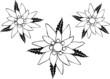 Edelweiss, Edelweiß, Blume, Blüte