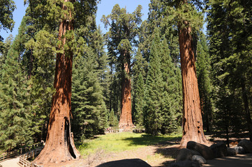 Sequoia Nationalpark, California, USA, General Sherman Tree